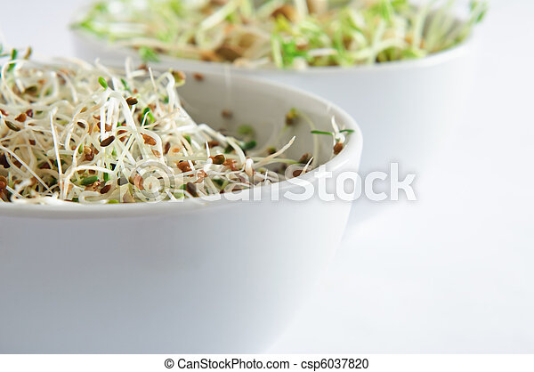 Beansprout Bowls Close Up - csp6037820