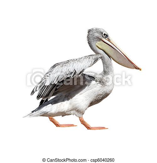 Pelican - csp6040260