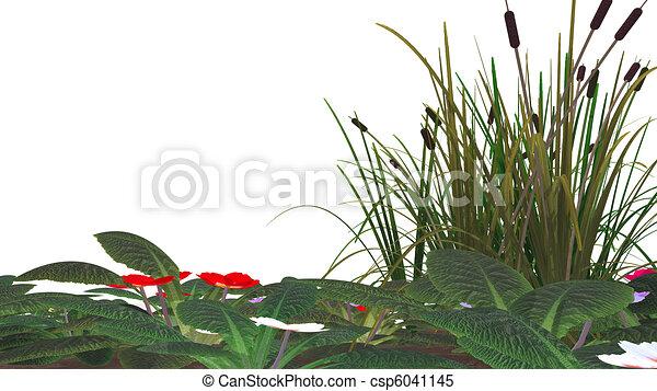 canne, fleurs, &, marais, herbe, isolé - csp6041145
