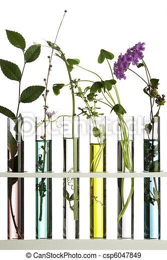 Flowers and plants in test tubes - csp6047849