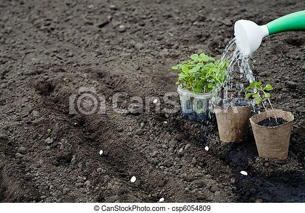 Agriculture - csp6054809
