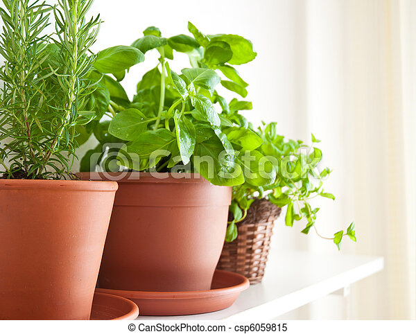 Rosemary, Basil and Mint in Pots - csp6059815