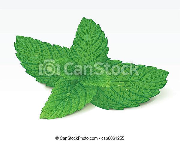 Mint - csp6061255