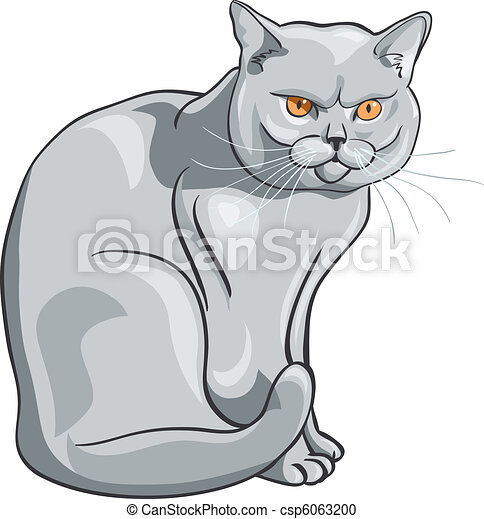 vector british blue cat sits and looks seriously - csp6063200