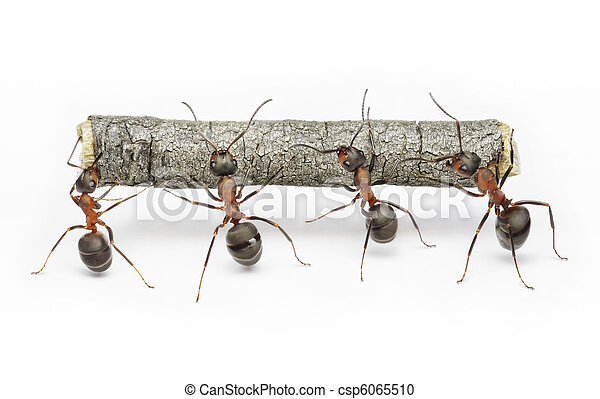 team of ants work with log, teamwork - csp6065510