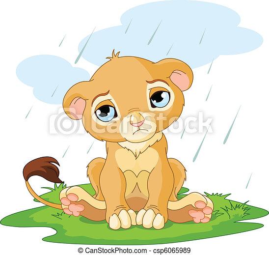 Sad lion cub - csp6065989