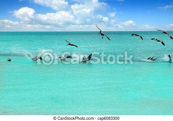 Caribbean pelican turquoise beach tropical sea - csp6083300