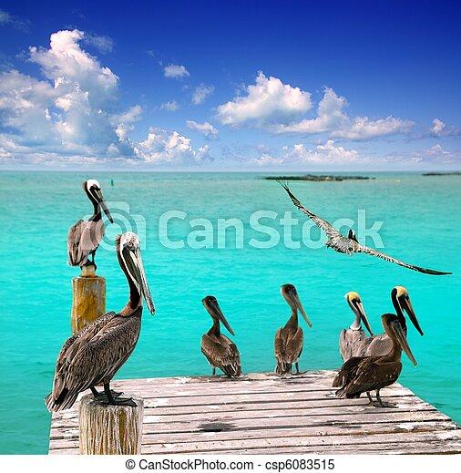 Caribbean pelican turquoise beach tropical sea - csp6083515