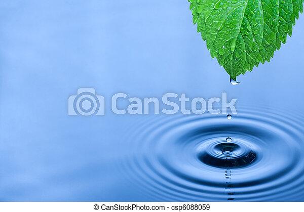 水, 綠色, 下降, 葉子 - csp6088059
