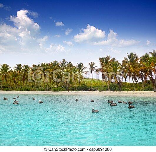 Immagini di pellicano turchese caraibico tropicale for Disegni di casa sulla spiaggia tropicale