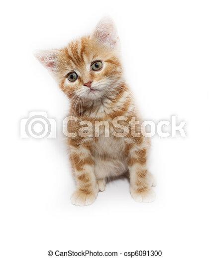 kitty - csp6091300