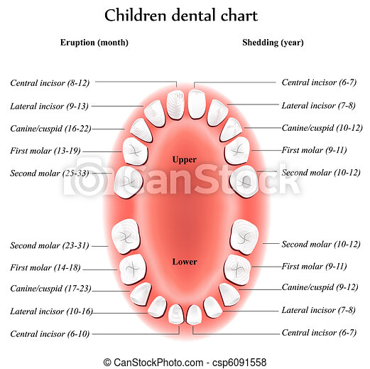 Children dental chart - csp6091558