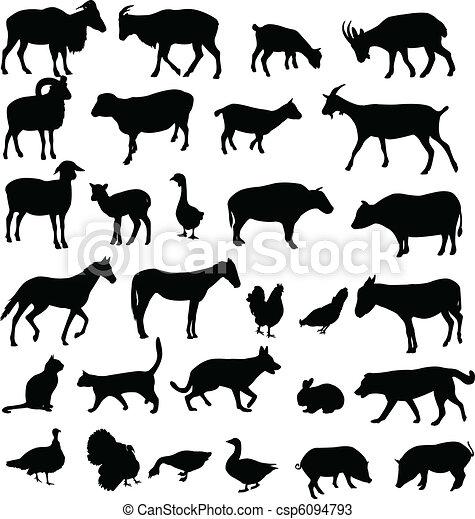 farm animals - csp6094793