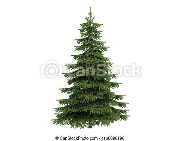 Vendita Conifere - Vivai Piante Ferretti
