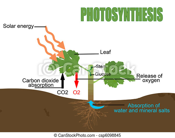 Clipart Vector of Photosynthesis, vector illustration ...