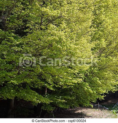Spring scenery - csp6100024