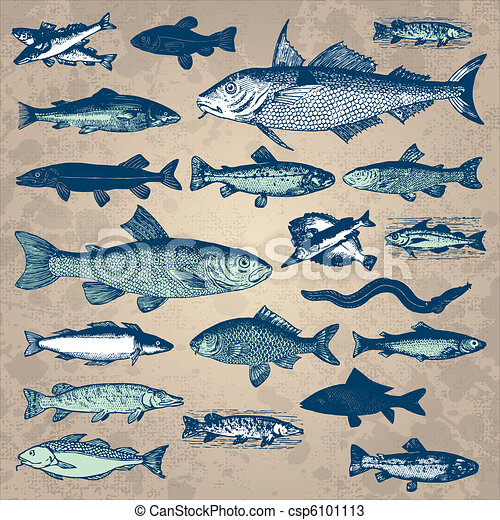 vintage fish set (vector) - csp6101113