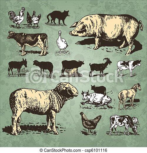 farm animals vintage set (vector) - csp6101116