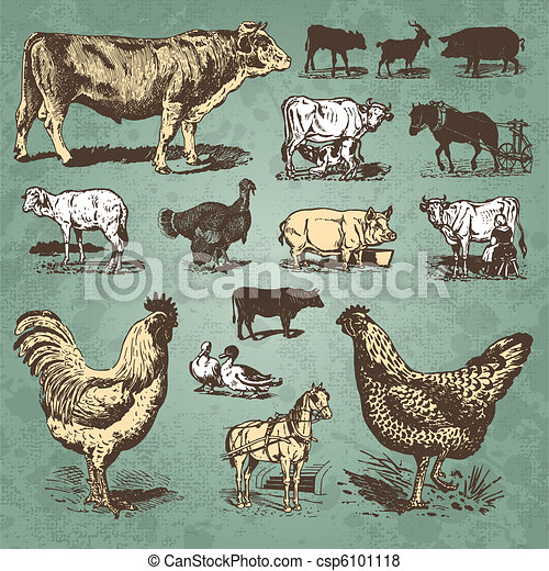 farm animals vintage set (vector) - csp6101118