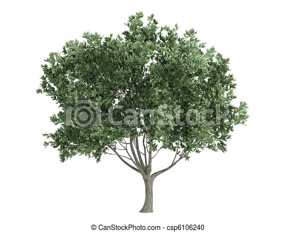 Olive or Olea europaea - csp6106240