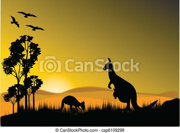 kangaroo sunset horizion - csp6109298