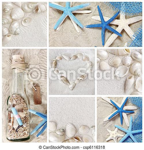 summer seashells - csp6116318