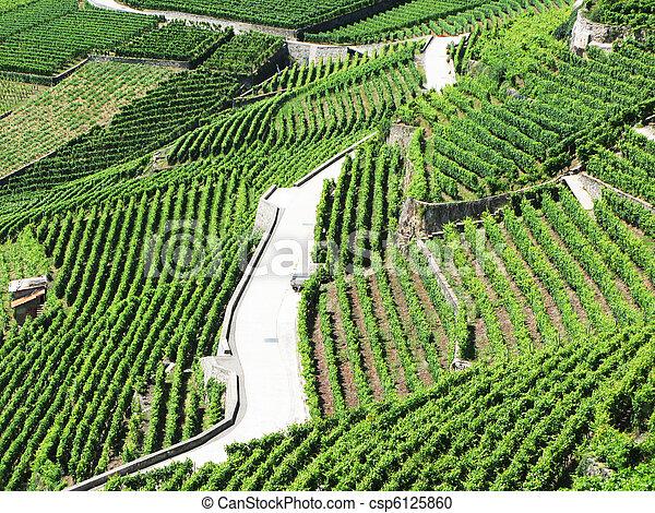 Ginevra,  famouse, regione, contro, lago, vigne, svizzera,  lavaux - csp6125860