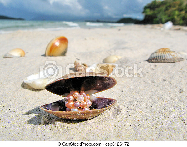Seashells on a beach of Langkawi island, Malaysia - csp6126172