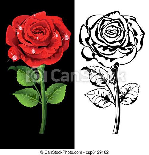 Roses - csp6129162