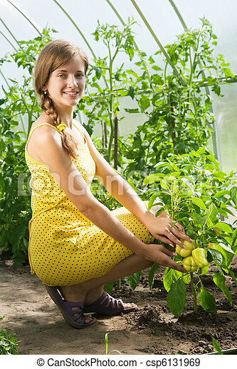 girl is picking  green pepper - csp6131969