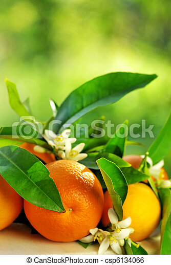 Orange fruits and flowers. - csp6134066