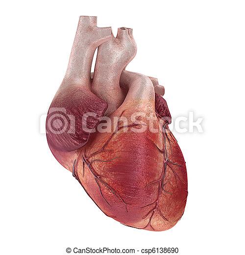 illustration de humain  coeur 3d  rendu  monde m u00e9dical Human Heart Clip Art Exercising Bloody Human Heart Clip Art