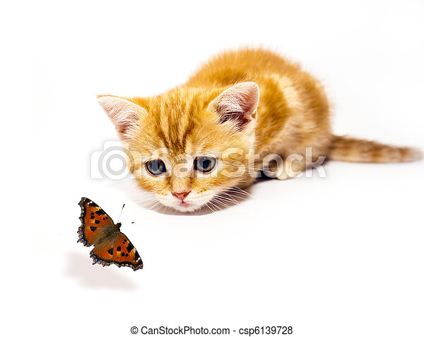 kitty and butterfly - csp6139728