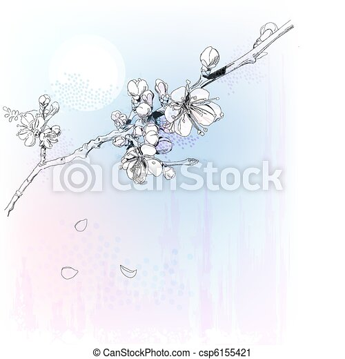 cherry blossoms in full bloom - csp6155421