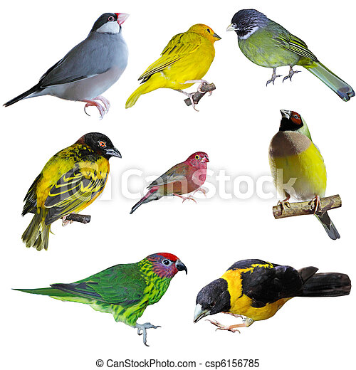 Set of Birds - csp6156785