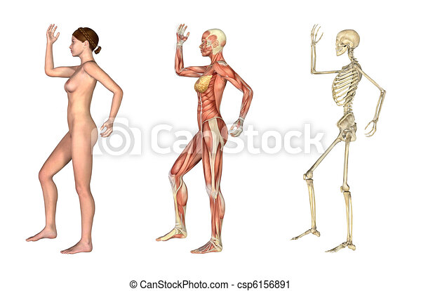Anatomical Overlays - Female with Arm and Leg Bent - csp6156891