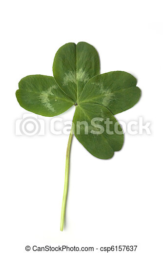 four leaved clover - csp6157637