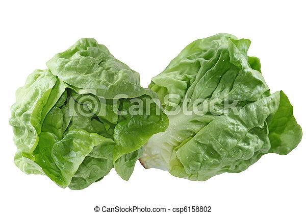 Boston Lettuce - csp6158802