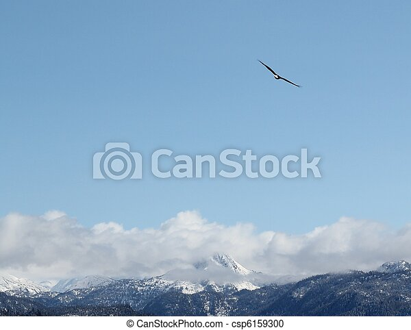 Soaring bald eagle - csp6159300