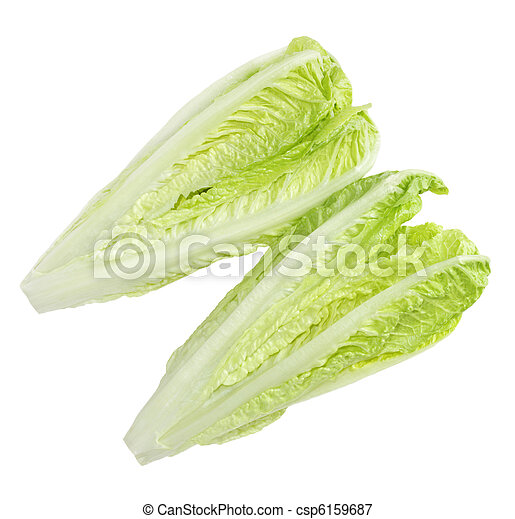 Roman Lettuce - csp6159687