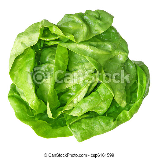 Boston Lettuce - csp6161599