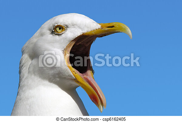 Seagull with its mouth wide open. - csp6162405