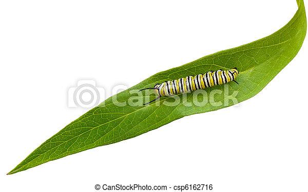 Caterpillar - csp6162716