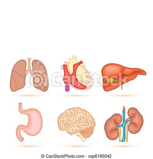Human Organ - csp6165042