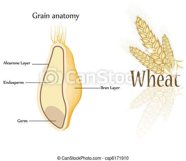 Wheat and grain - csp6171910