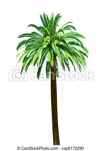 Single Palm tree - csp6172290