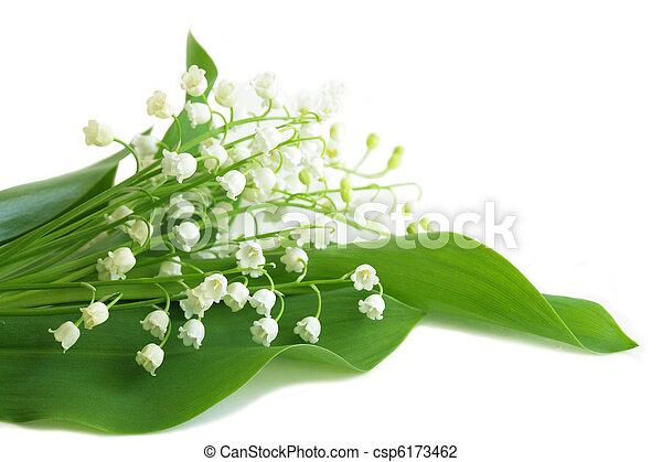May Lily - csp6173462
