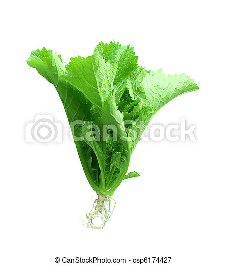 Mustard Green Plant - csp6174427