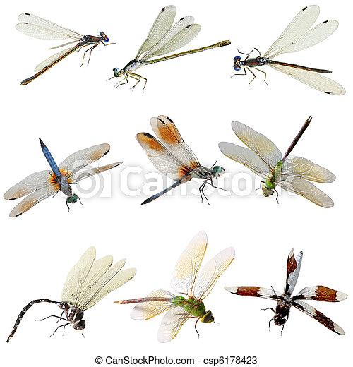 蜻蜓,  Damselfly - csp6178423