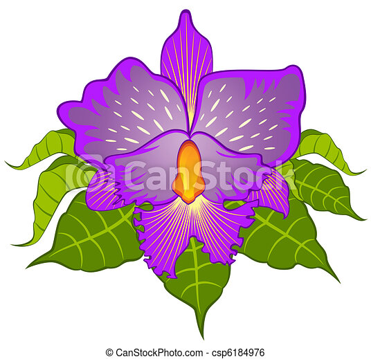 ... orchid. Vector csp6184976 - Search Clipart, Illustration, Drawings
